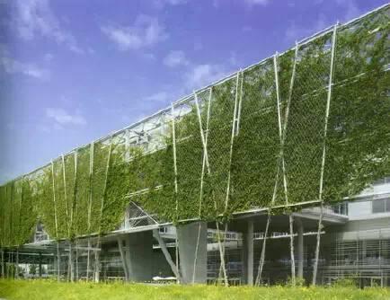 垂直绿化应用案例、方法、植物全解析