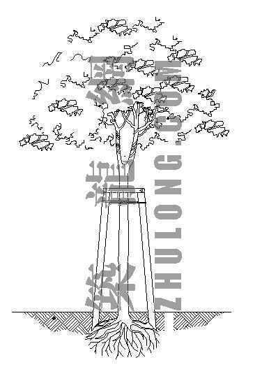 常绿乔木栽植支撑架示意图