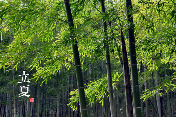 干货·园林植物全年养护管理方案,必看篇!_9