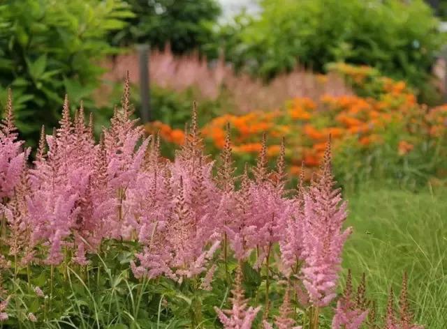 干货 景观地被植物的选择方式_9