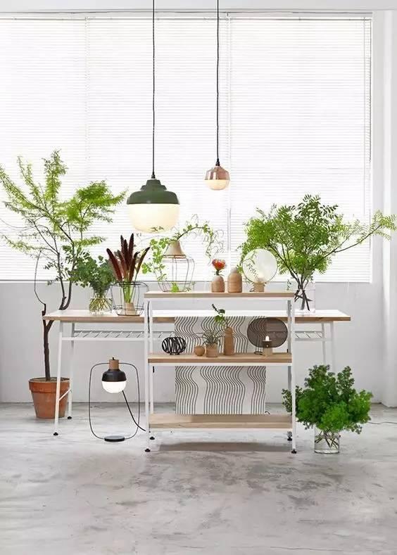 """植物能让你的家""""活""""起来,可是你选对了吗?"""