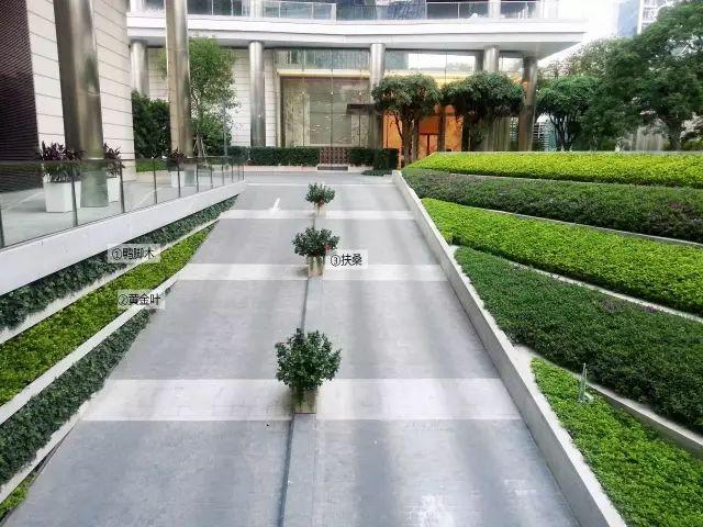 最详细图解:深圳湾三大豪宅景观植物配置!_18