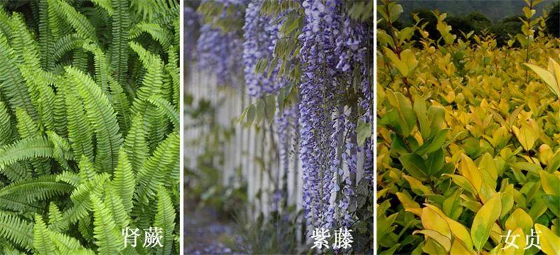 植物造景·实用景观设计来一波_39
