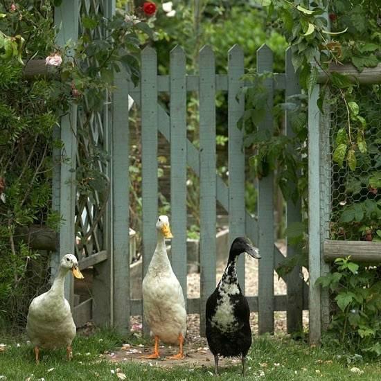 你真正需要的,也许只是一个小院,看繁花爬满篱笆_15
