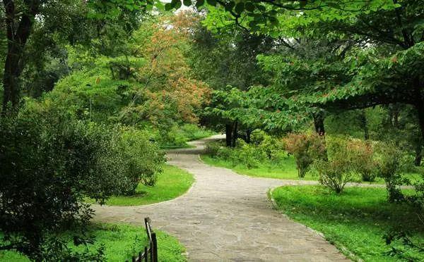 园林植物的空间设计