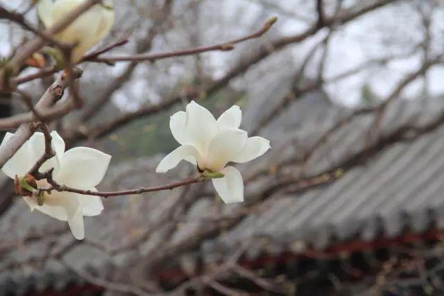 古代园林中,具有象征意义的植物有哪些?-点击查看源网页