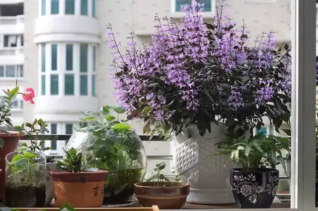 想要这样一个阳台,过小日子,看花开_13