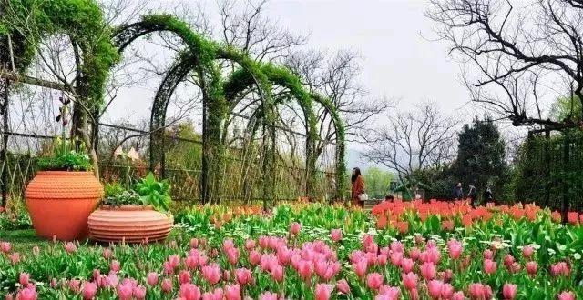 实用 景观植物设计方法(图文解析,值得收藏)_25