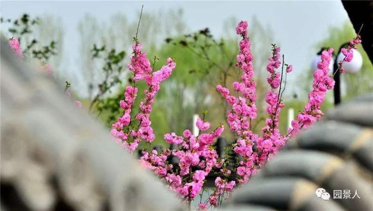 春之特色园林植物 · 华南特辑