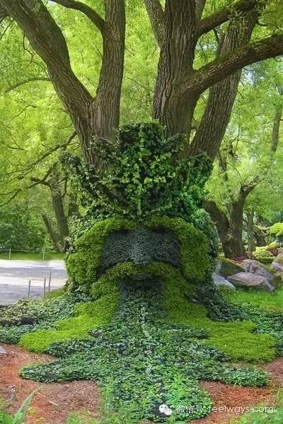 藤本植物[攀附的美丽]-640.webp (19).jpg
