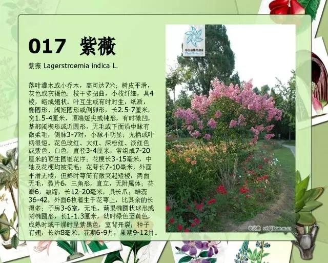 100种常见园林植物图鉴-20160523_183224_020.jpg