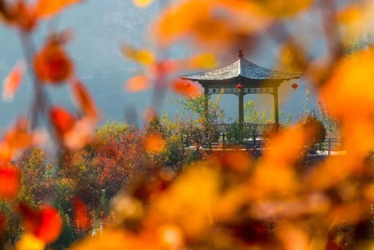 这里的秋天会画画,住进获国际大奖的最美民宿:姥姥家_29