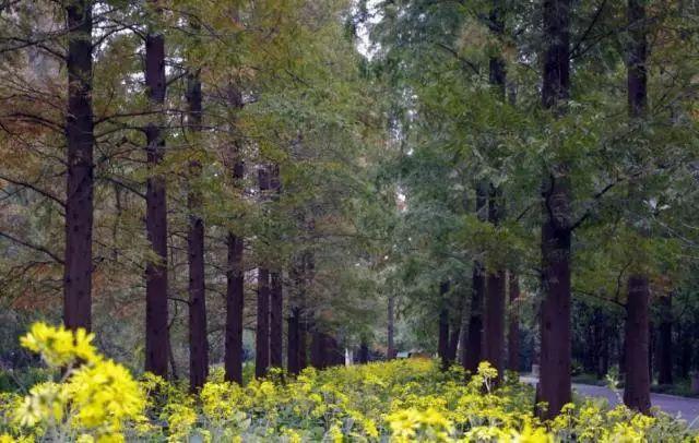 园林景观,到底是怎样的一个专业?_5