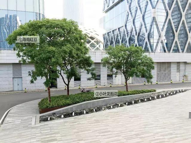 最详细图解:深圳湾三大豪宅景观植物配置!_22