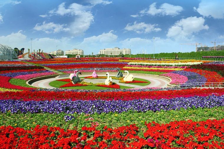 世界上最美的花园设计-迪拜奇迹花园Dubai Miracle Garden
