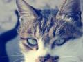猫叔说监理--防水施工验收要点--防渗漏