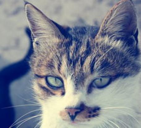 猫叔说监理--安全监理控制要点--监理免责