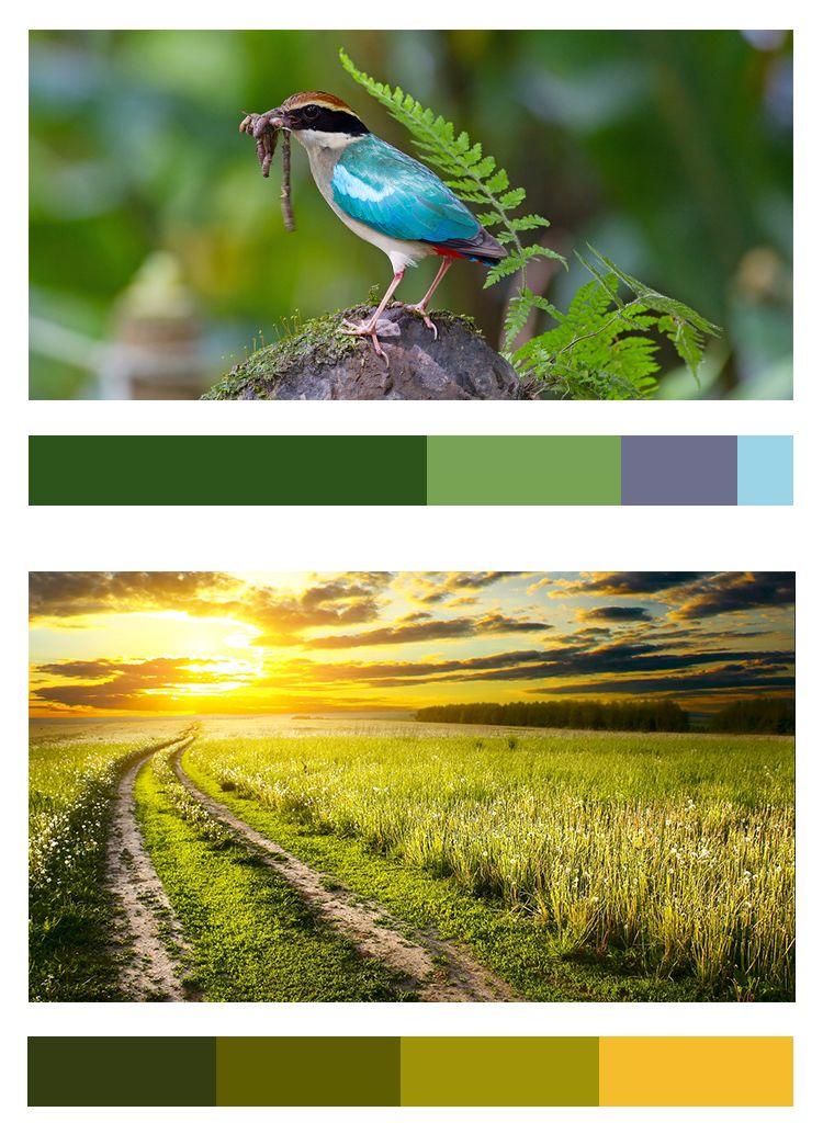 不会做小清新景观图纸,我敢肯定,99%就是配色的问题_40