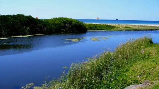 生态河道修复工程—河岸带生态修复技术