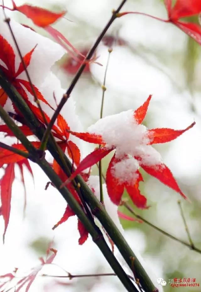 最美不过初雪,宿迁的项王故里就变成了西楚古城_15