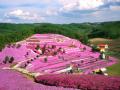 [广东]诗意栖居生态旅游区景观规划设计方案
