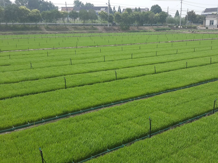 小型农田水利节水灌溉施工组织设计方案word版(共61页)