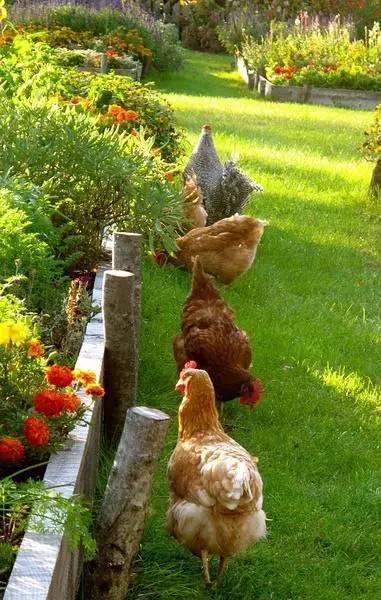 你真正需要的,也许只是一个小院,看繁花爬满篱笆_13