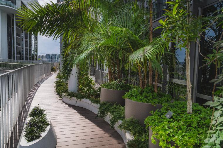 新加坡Tembusu雨林住宅-12
