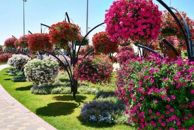 迪拜的花卉展览,全世界规模最大!你肯定没看过!_19