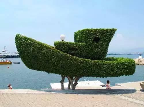 植物2_看图王.web.jpg