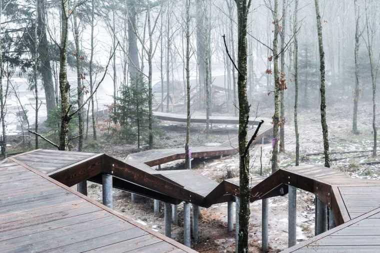 丹麦校园里的神奇树林景观-21