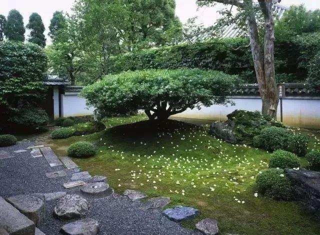 日式庭院景观树,美在哪里?