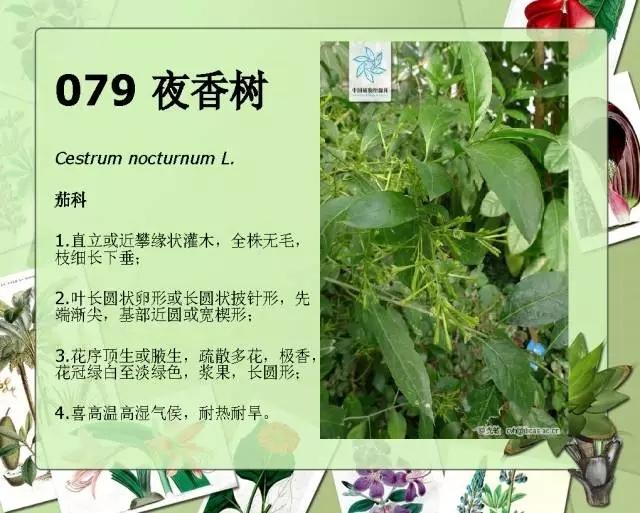 100种常见园林植物图鉴-20160523_183224_100.jpg