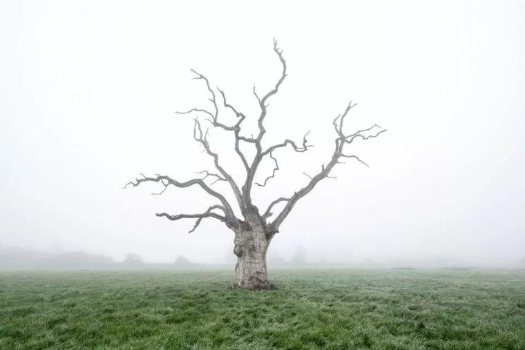 当房子遇上树,这群设计师要上天_20