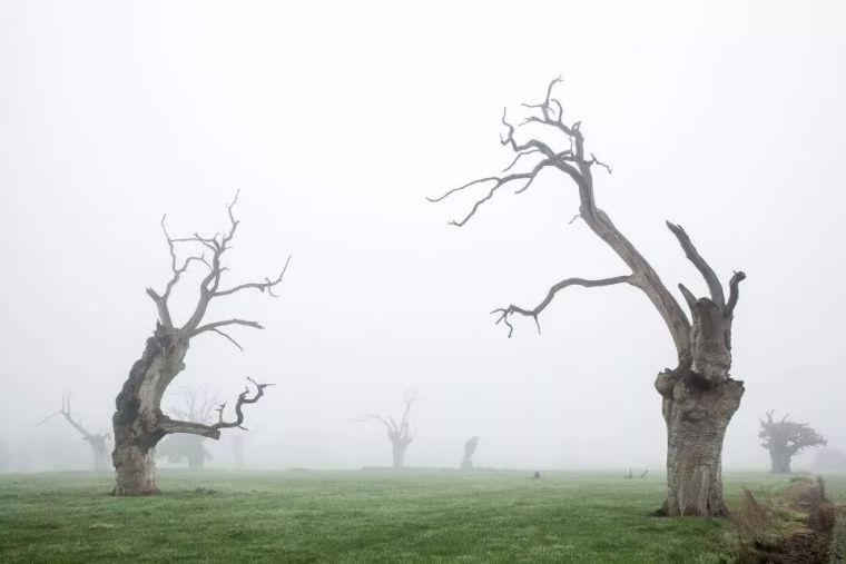 当房子遇上树,这群设计师要上天_19