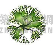 平面彩图树1