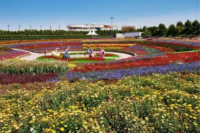 迪拜的花卉展览,全世界规模最大!你肯定没看过!_31