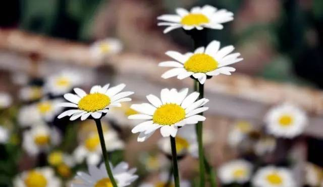 秋季要种的高颜值好养易活的植物界小公举!_7