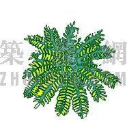 平面彩图树24