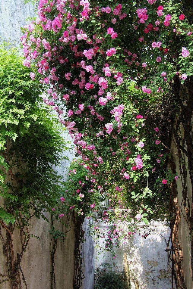 想要一个小院子,花开花落一辈子_25