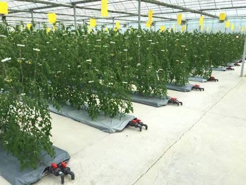 农业滴灌技术的介绍与应用范围