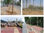 市政道路工程实施性施工组织设计123页(含排水工程)