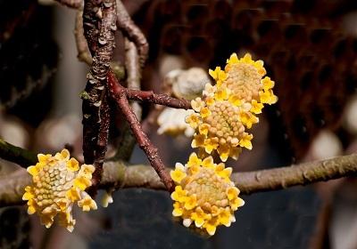 香花植物-嗅觉盛宴_3