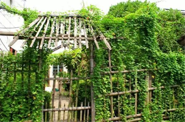 你真正需要的,也许只是一个小院,看繁花爬满篱笆_5