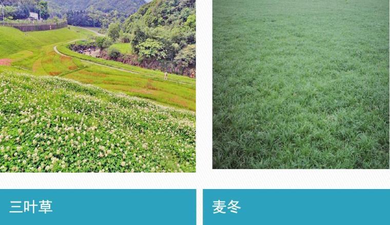 草坪、乔灌木施工及养护管理知识培训PPT