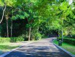 道路绿化中,城市干道植物应怎样配置?