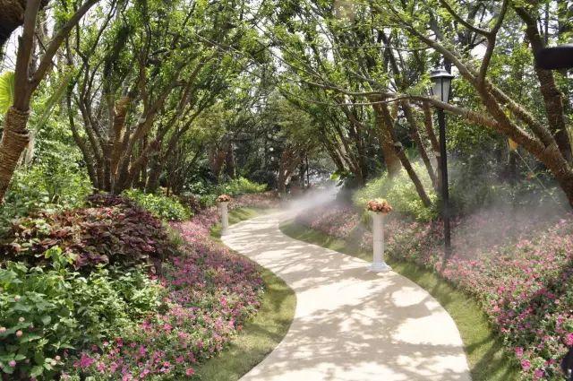 必看 园林植物种植禁忌65例_6