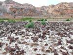 盐碱地绿化市场庞大,树种选择是关键!