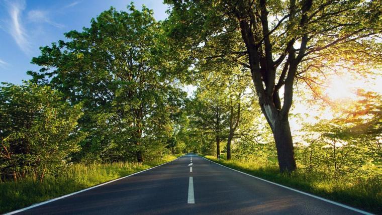 园林绿化工程投标文件及施工组织设计