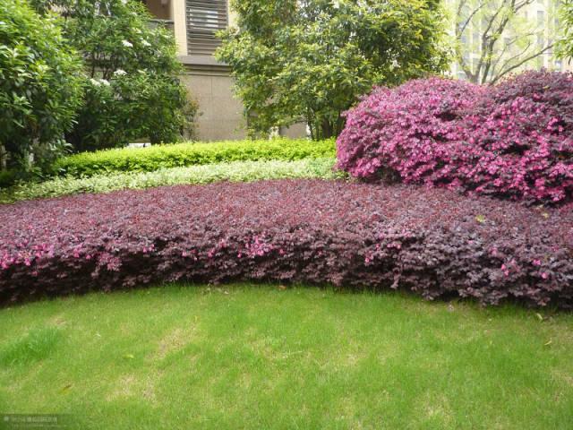 植物设计中花卉灌木植物色块的应用处理_1